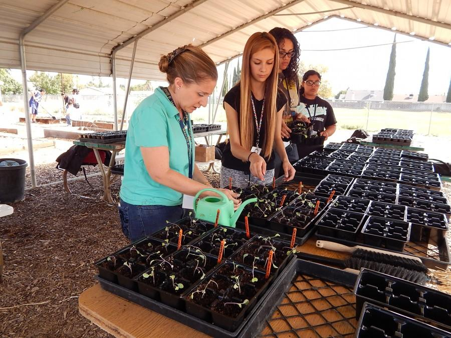 New plans blossom for class garden